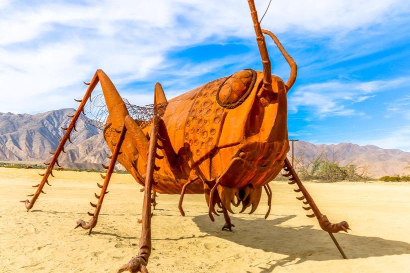 Desert Cricket