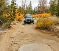 Fall beauty on the Wheeler Ridge Trail