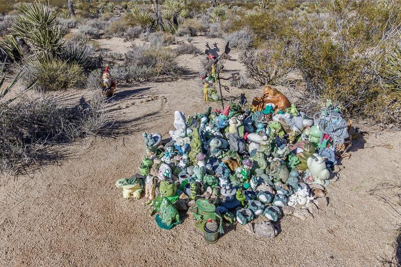 Mojave Desert... Frogs!